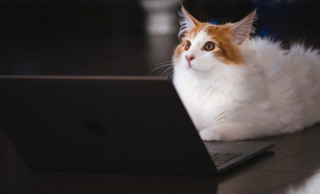 猫とパソコン画像