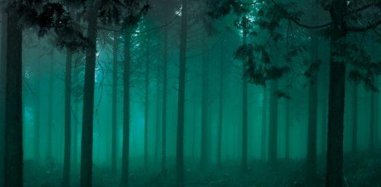 深い森画像