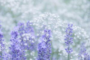 癒し系の花畑画像