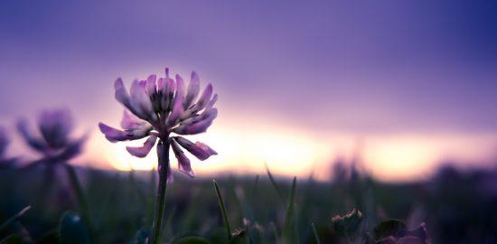 夕暮れと花の画像