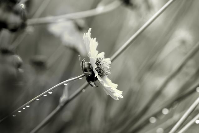 花としずく画像